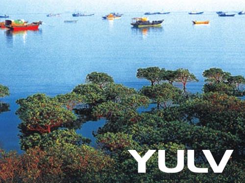 阳西咸水矿温泉度假村周边景点-程村红树林